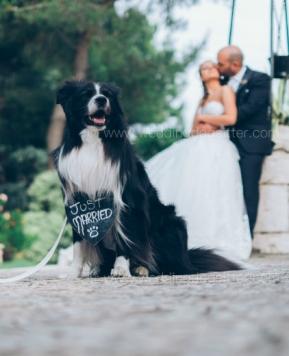 Fido a nozze: il servizio di Wedding Dog Sitter