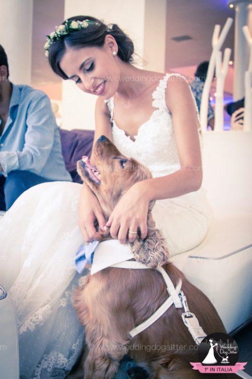 Tommy - Wedding Dog Sitter