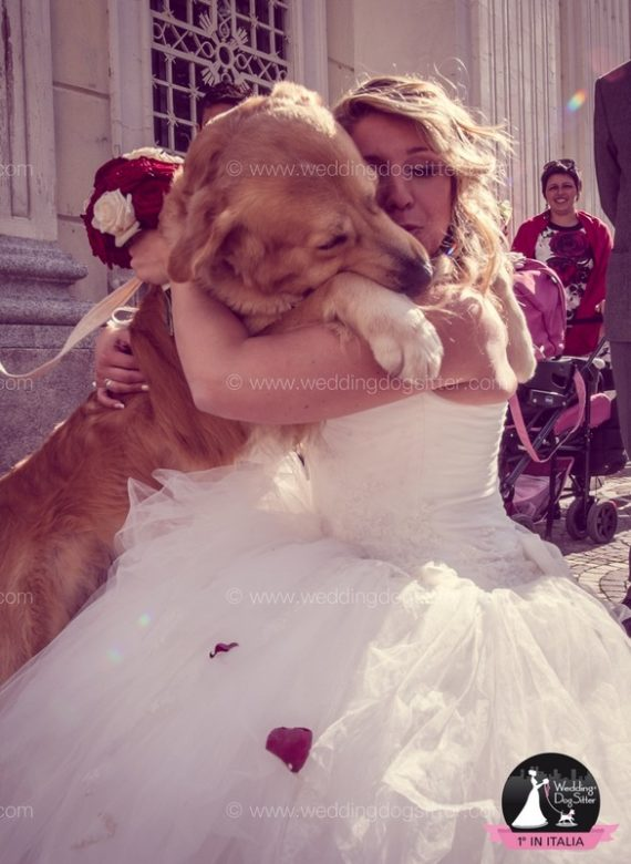 WEDDING DOG SITTER VARESE, COMO, SVIZZERA071