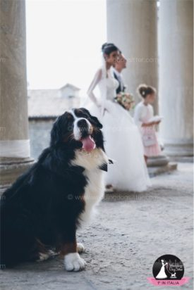www.weddingdogsitter.com-fotografo-matrimonio-con-il-cane-san-marino-45