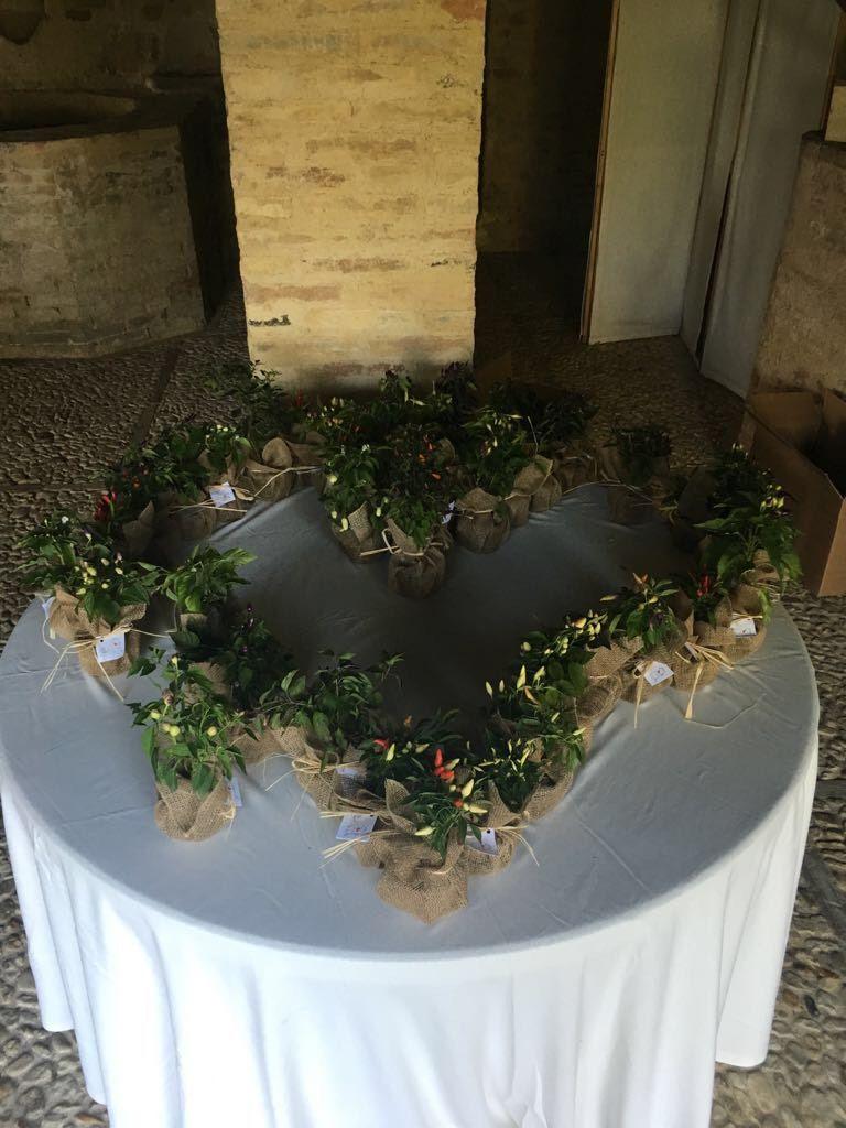 Piantine di peperoncino come bomboniere per il matrimonio in stile medievale di Jessica e Lorenzo