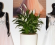Tessuti leggeri e color magenta, predominano la collezione 2020 Lucciano Rivieri