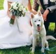 Wedding Dog Sitter, il servizio per vivere il giorno del Sì con il tuo cane
