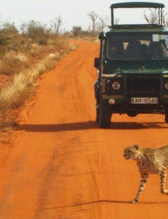 In questa foto viaggio di nozze in Africa