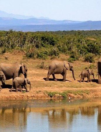 In questa foto paesaggi della Tanzani