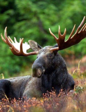 In questa foto un tipico safari in America del Nord